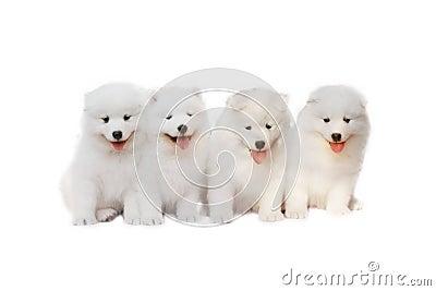 Słodkie szczeniaki