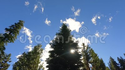 Słoneczny dzień przy sekwoja parkiem narodowym zdjęcie wideo