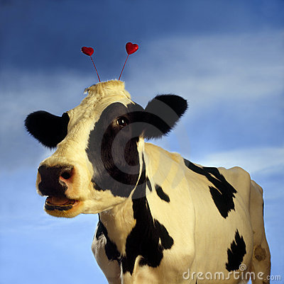 S-1585-Cow with hearts