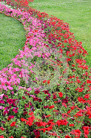 Picture Flower Beds on Shaped Flower Bed In Meadow Stock Photo   Image  15090810