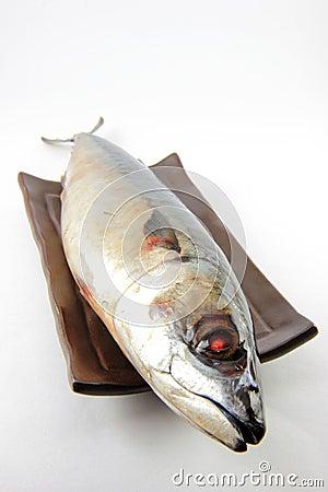 Saba fish