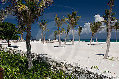 Sabbia e palme bianche dell oceano del Messico