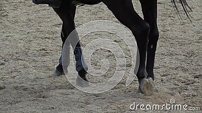 Sabots de cheval fonctionnant par un champ ar?nac? vid?o anim?e lente clips vidéos