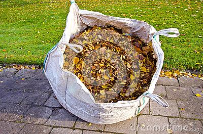 Sack with autumn dry leaves in city park