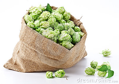 Sack of hops