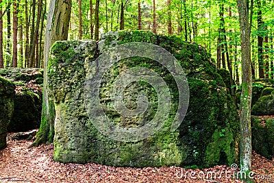Sacred Druid Grove