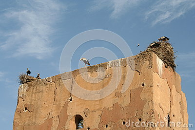 Sacred storks in Marrakech