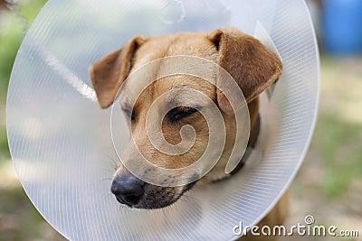 Sad animal suffering
