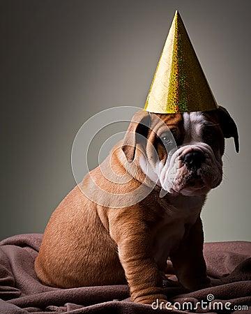 Free Sad Australian Bulldog Puppy Royalty Free Stock Photos - 15433498
