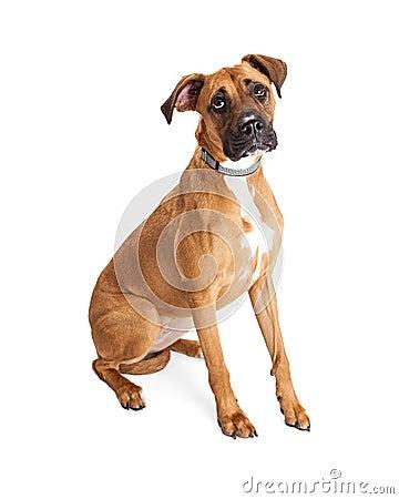 Free Sad Big Dog Looking Up Stock Images - 70322404