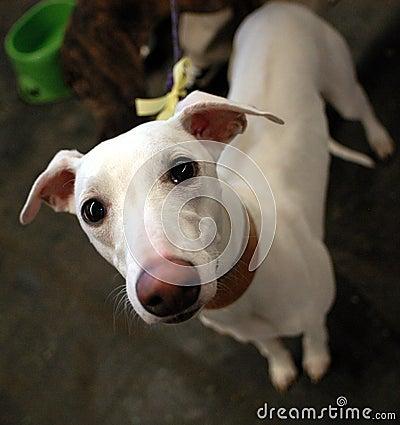 Free Sad Dog Stock Images - 1144624
