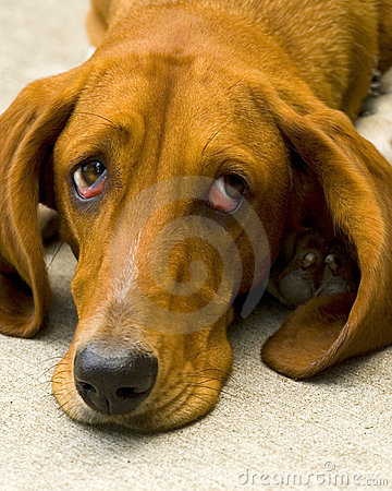 Free Sad Dog Stock Photography - 4686132