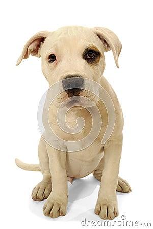 Free Sad Dog Royalty Free Stock Photo - 6338395