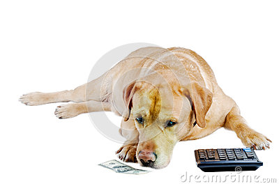 Sad dog count  money