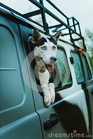 Free Sad Dog Husky Looks Out Of The Window While Sitting In The Car Royalty Free Stock Photos - 75137098