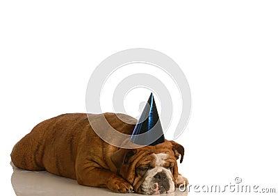 Sad dog at party