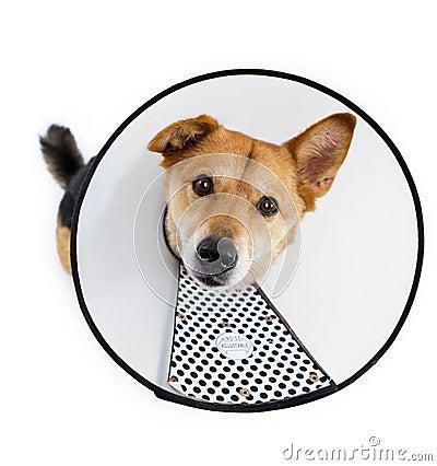 Sad dog with protective hood