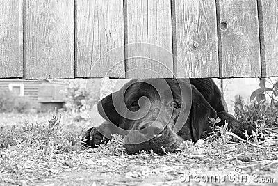 Sad dog under the fence