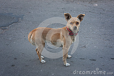 Sad Eyes Stray Dog Stock Photo - Image: 47232132