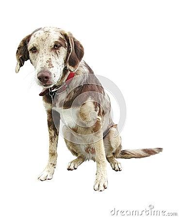 Free Sad Face Dog Isolated White Background Stock Photo - 5254800