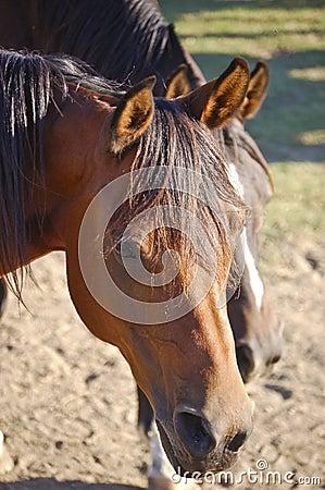 Sad Horse on the farm