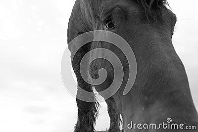 Sad horse portrait