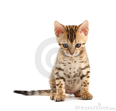 Free Sad Kitten Stock Photo - 11719060