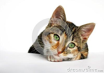Sad little cat
