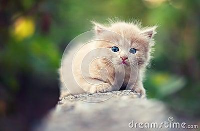 Sad little kitty