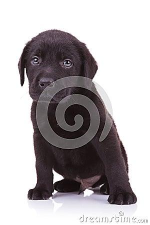 Free Sad Little Labrador Retriever Puppy Dog Stock Photo - 29955430