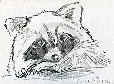 Sad little raccoon