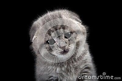 Sad lonely kitten