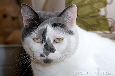 Sad looking black and white cat