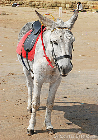 A sad looking Donkey on the beach..