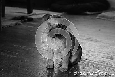 Sad pup alone