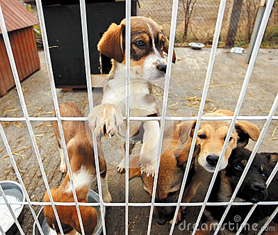 Sad Puppies Shelter Stock Photo Image 55110464
