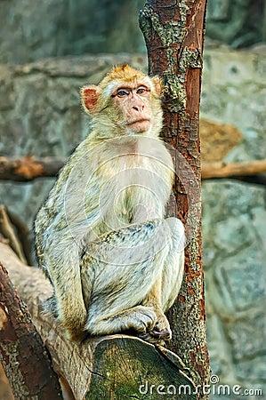 Sad sitting monkey