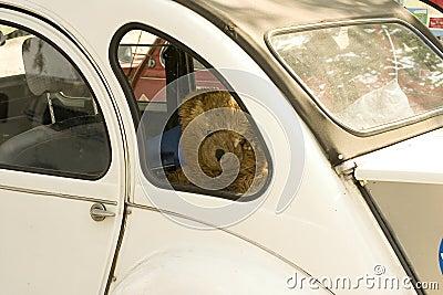 Sad Teddy-bear