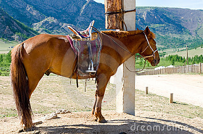 Saddled horse at tethering post