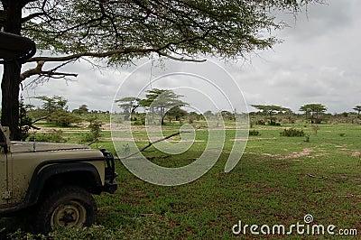 Safari Break