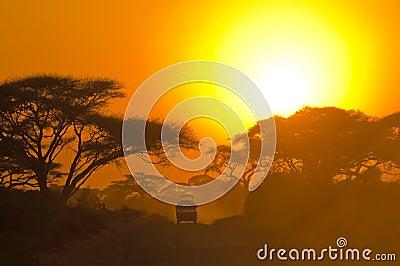 Safari jeep driving through savannah