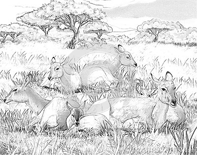 safari people coloring pages - photo#35