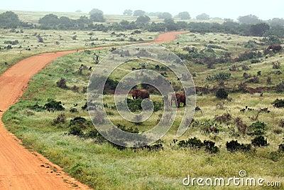 Safari road South Africa