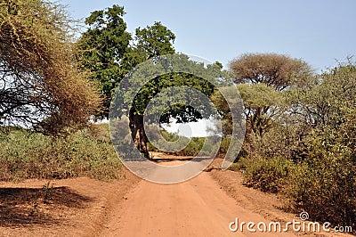 Safari route