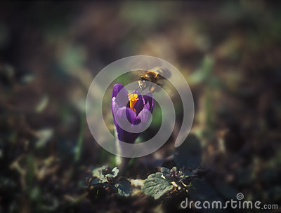 Saffron and bee.