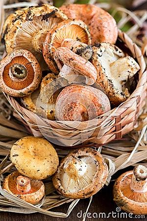 how to cook saffron milk cap mushrooms