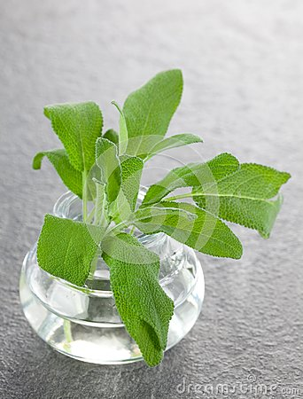 Sage in a glass