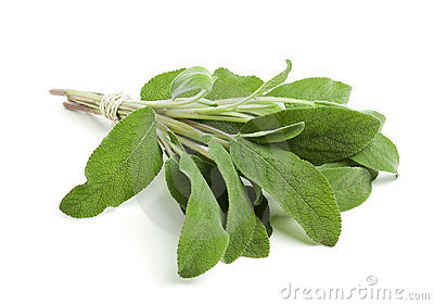 Sage leaves bundled with twine