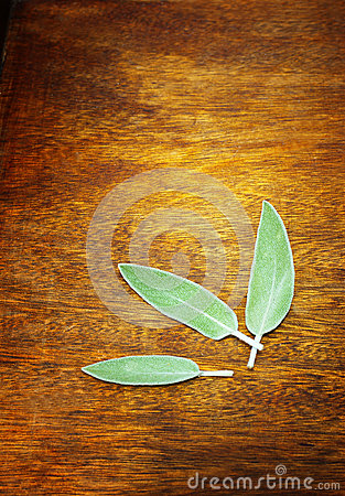 Sage plant leaf on wooden table