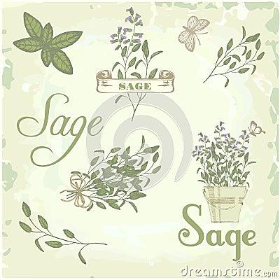 Sage, salvia, clary sage, herb,